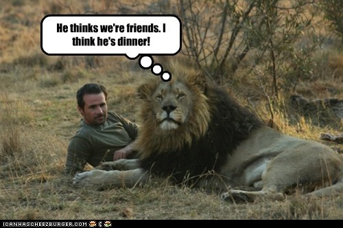 lion dinner friends hungry cute