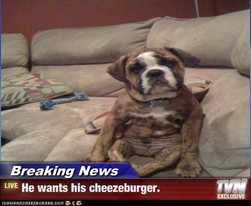 Cheezburger Image 6609040384