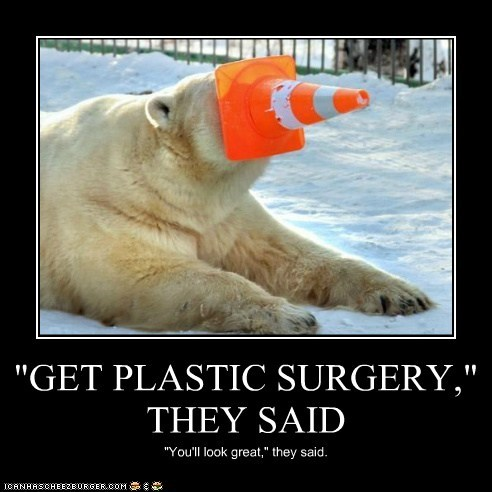 polar bear,plastic surgery,They Said,traffic cone,stuck
