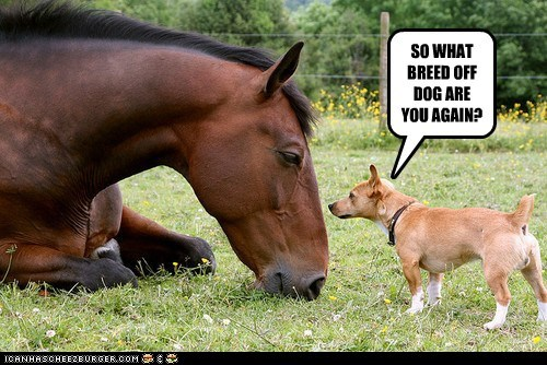 dogs confused what breed horse - 6609110272