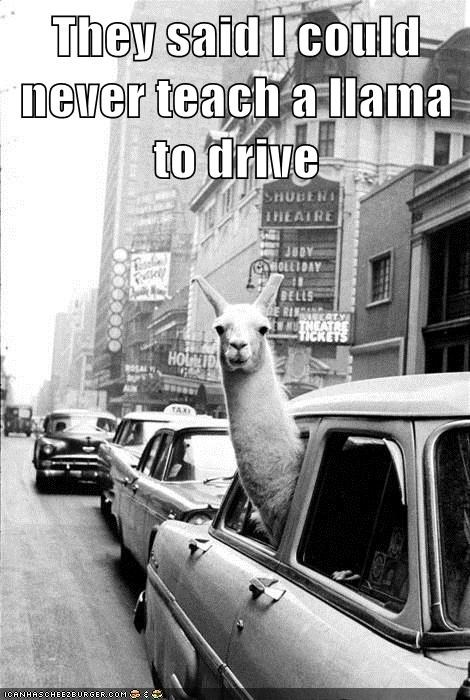llama,car,drive,park,teach