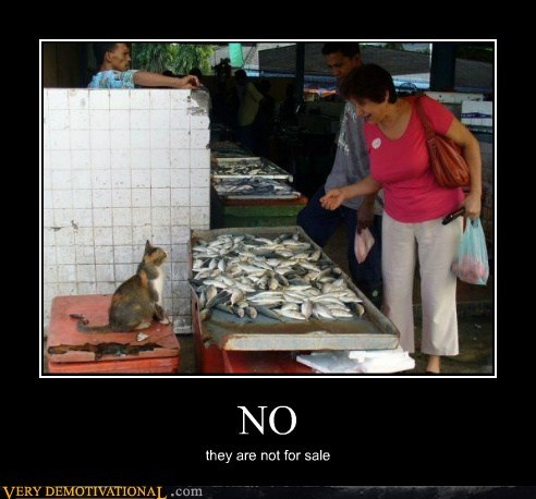cat,fish,for sale