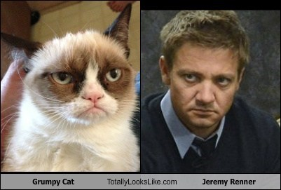 actor,cat,celeb,funny,Grumpy Cat,Jeremy renner,TLL