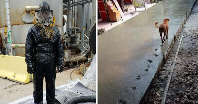 Sad pics dogs jobs annoying disaster concrete cars spills jackpot funny vandalism - 6609925