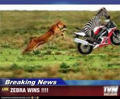 Breaking News - ZEBRA WINS !!!!