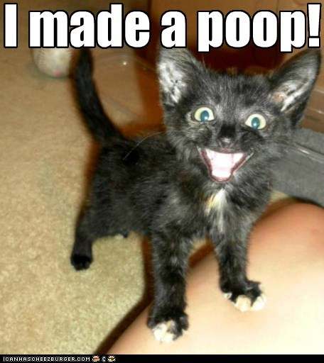 poop everybody poops excited happy proud Cats captions categoryimage - 6610130176