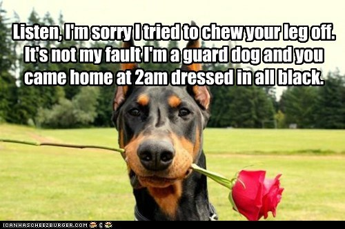 doberman pinscher dogs rose my bad apology burglar