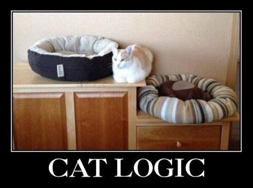 beds,cat beds,cat logic,Cats,comfort,comfort is relative,comfortable,logic