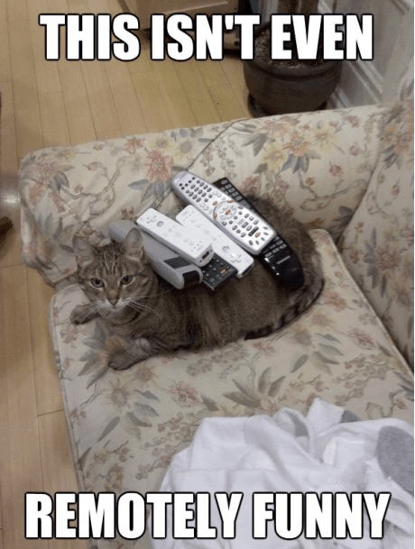 cat,do not want,double meaning,funny,literalism,remote,remotely,remotes