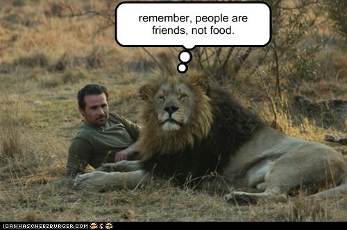 lion,remember,mantra,people,food,rehabilitated,friends