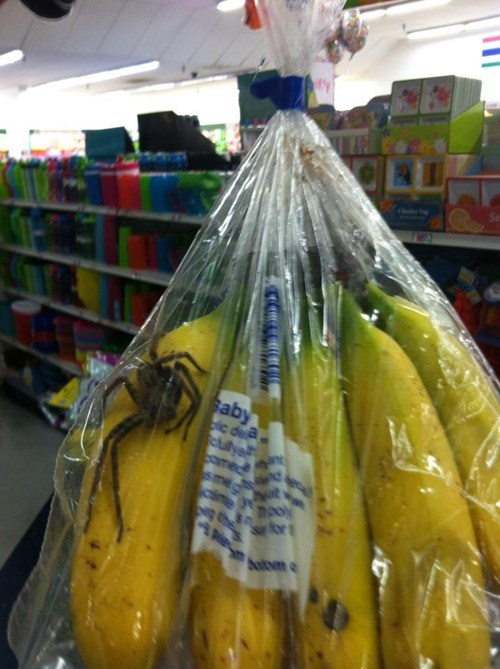 bananas fruit nope oh god spider - 6610961664