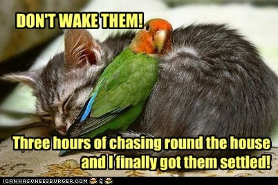 kitten babysitting parrot sleeping chasing plea settled