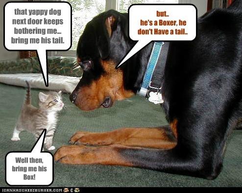 cat dogs box kitten tail doberman boxer - 6611080448