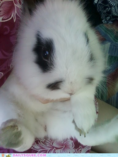 reader squee squee pet bunny rabbit happy bunday - 6611083776