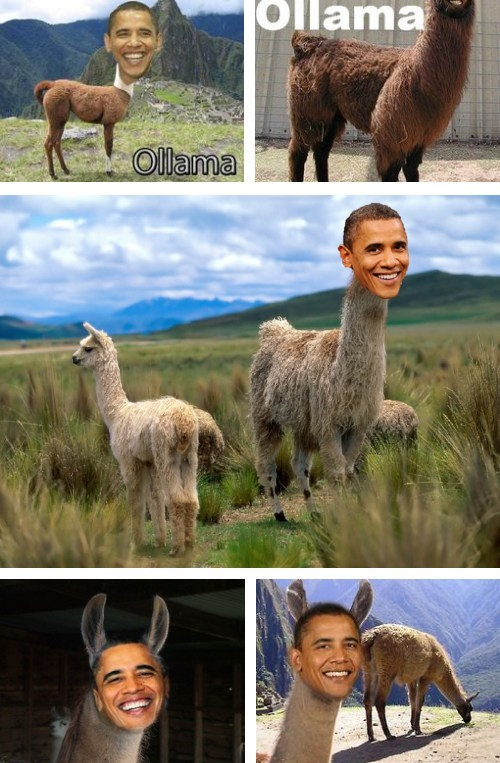 barack obama combination llama name photoshop - 6611117568