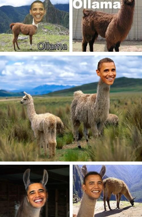 barack obama combination llama name photoshop