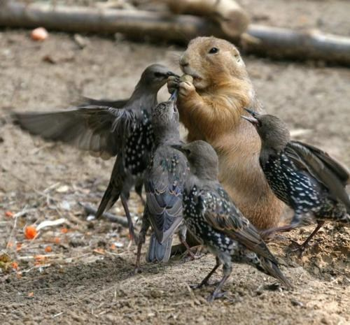 bird,Interspecies Love,noms,peace,prarie dog,sharing