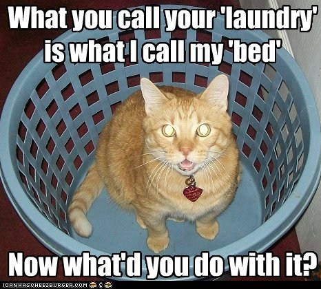 What you call your 'laundry' is what I call my 'bed' Now what'd you do with it?