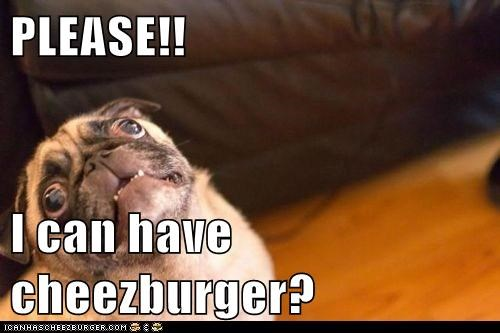 Cheezburger Image 6611488768