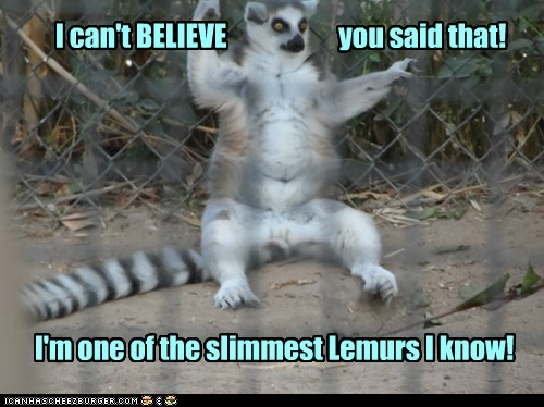 I can't BELIEVE you said that! I'm one of the slimmest Lemurs I know!