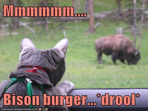 Cheezburger Image 6611558400