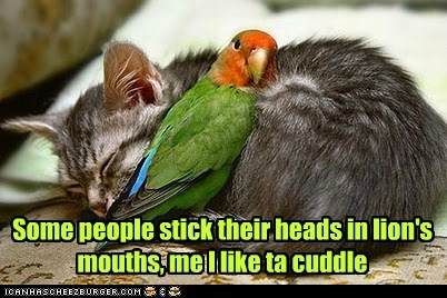 lions cat cuddle dangerous parrot - 6611573760