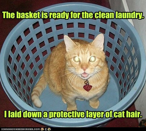 The basket is ready for the clean laundry. I laid down a protective layer of cat hair.