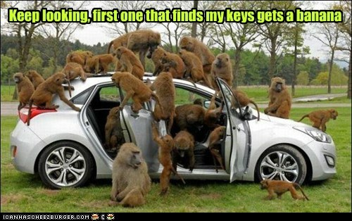 monkeys,car,keys,lost,banana,rewards,searching,effective