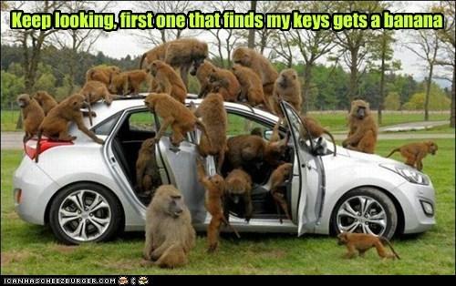 monkeys car keys lost banana searching effective - 6611608064