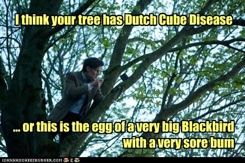 blackbird,the doctor,Matt Smith,doctor who,sore,egg,tree,cube