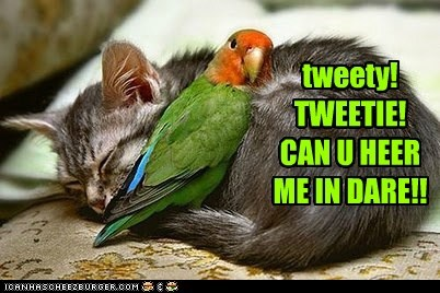 tweety! TWEETIE! CAN U HEER ME IN DARE!!