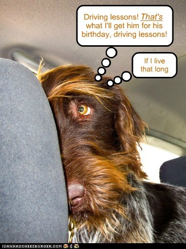dogs car scared driving lessons what breed - 6611774720