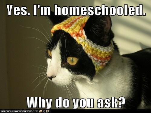 captions Cats dork homeschool new social - 6612002048