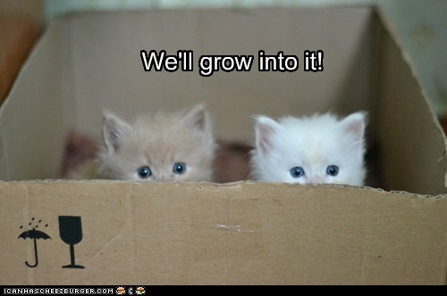 baby box captions Cats grow if it fits kitten - 6612501504