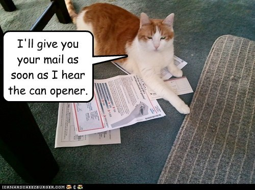 Cats,captions,can opener,food,mail,hostage