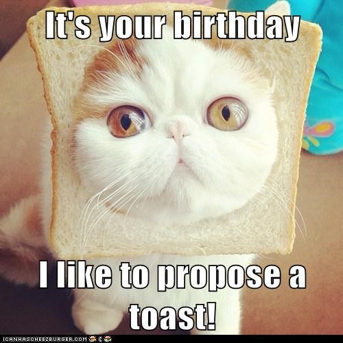 birthday toast cheers inbread Cats captions pun - 6612587776