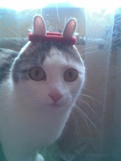 Cats,hair ties,headbands