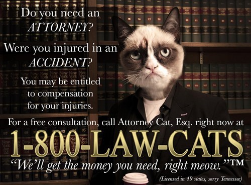 attorney Grumpy Cat law cats lolcats - 6613214720