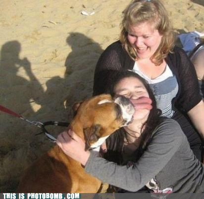 dogs,animal,beach,lick