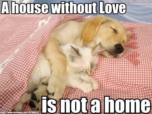 a house is not a home,captions,Cats,cuddles,cuddling,dogs,goggies r owr friends,homes,houses,hugging,Interspecies Love,love