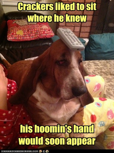 dogs basset hound hands pet me remote control strategy - 6613508864