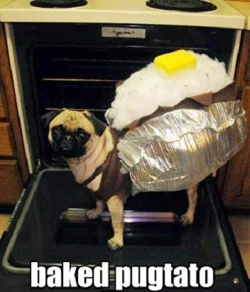 bake potato,dogs,oven,pug