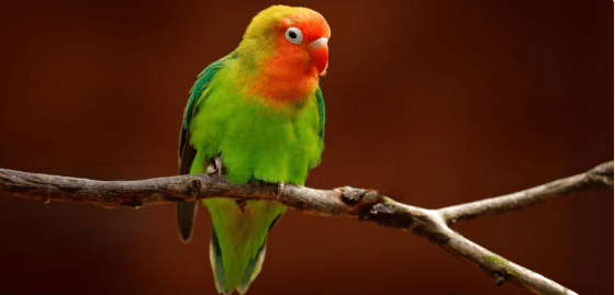 pets birds owners imitation sneezing - 6613765