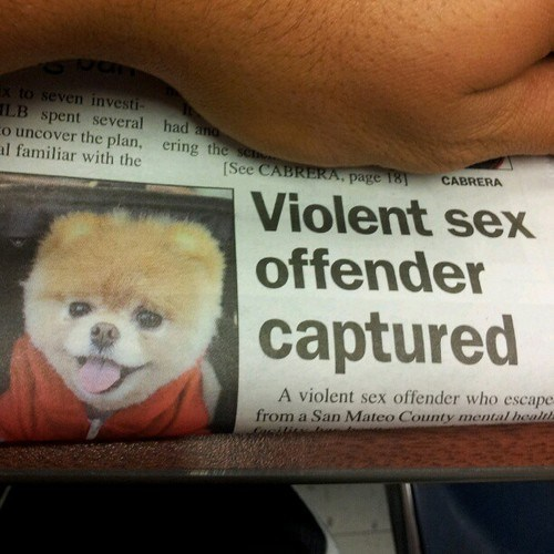 article,dogs,FAIL,monster,newspaper,offender,placement,pomeranian,violent