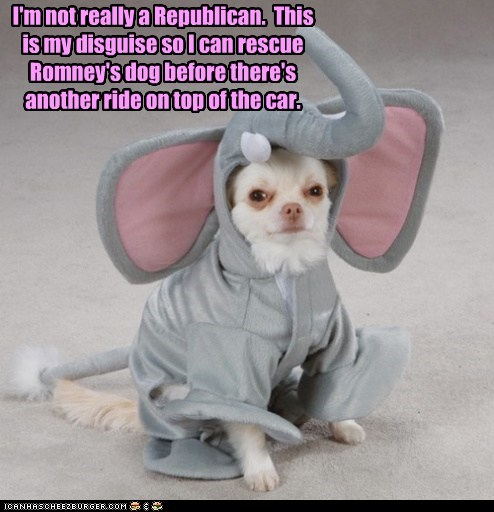 I'm not really a Republican. This is my disguise so I can rescue Romney's dog before there's another ride on top of the car.