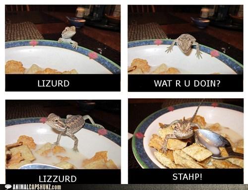 lizard,wat r u doin,stahp,cereal,crawling,bowl