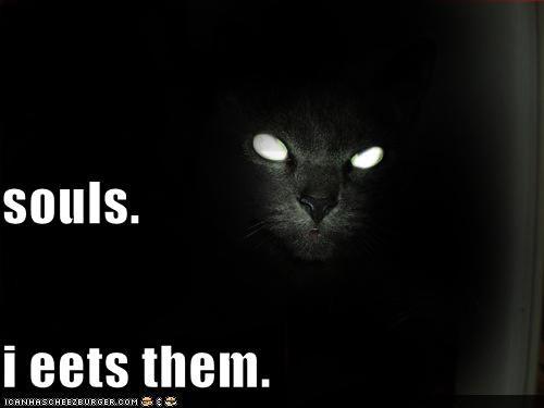 basement cat darkness evil lolcats nom nom nom souls - 661471488