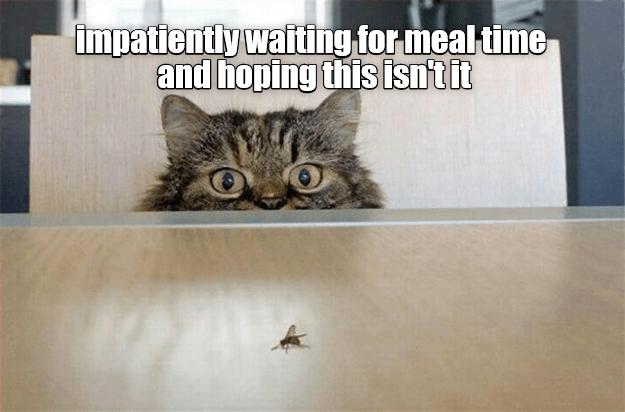 Cheezburger Users Funny Memes Memes Cat Memes 6614789