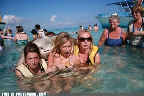 animals beach girls stingray - 6614791424