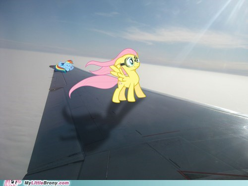 fluttershy flying IRL plane rainbow dash vacation - 6615363072